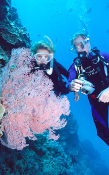 Diving with Coral on Silverswift