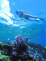 snorkelling the great barrier reef cairns australia