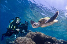 Diving & Learn To Dive Courses