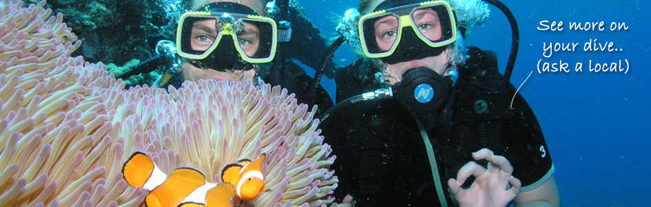 Liveaboard Diving Trips Cairns
