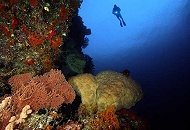 Outer Barrier Reef Liveaboard Trips