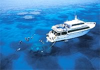 Diving cairns live aboards pro dive cairns 3 day outer - Pro dive cairns ...